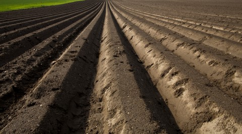 Furrows On A Farmland