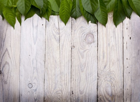 Green Leaves On Boards